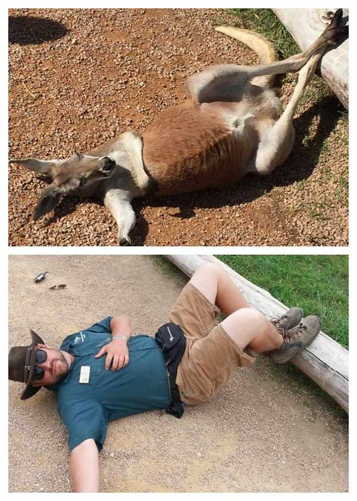 16 Funny Pictures of Zookeepers as Animals Will Make Your Day -13